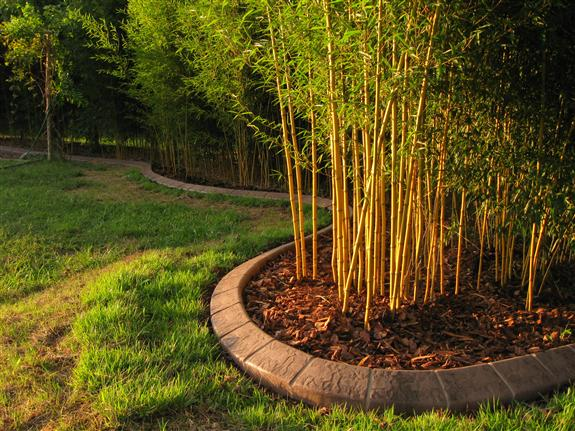 Bamboo Grown Right Here In Rutherford County The
