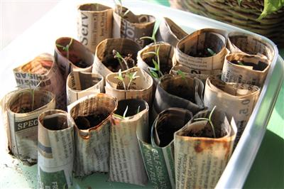 Seed cups newspaper