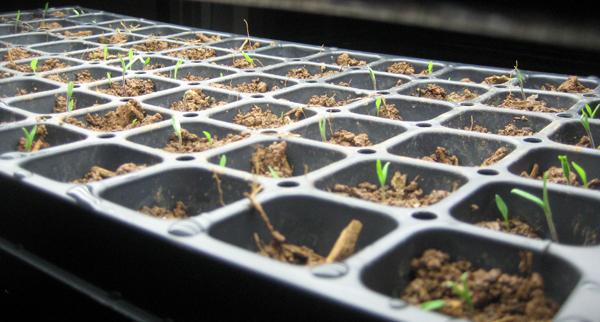SeedStarts