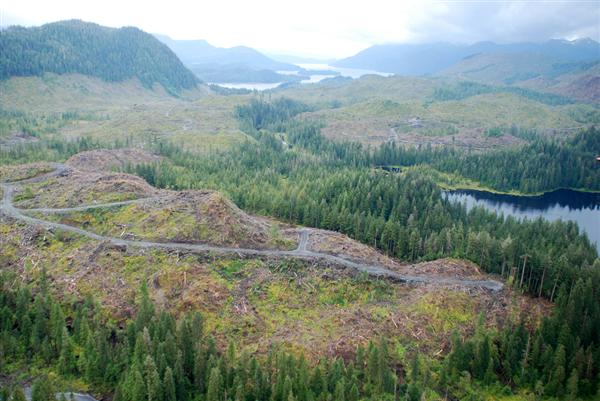 Musicwood Tongass_clearcut