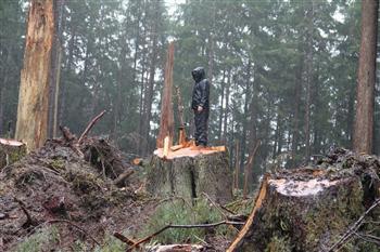 Musicwood on_stump_in_rain