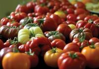 Organic-tomatoes-RGB