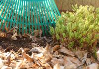 raking_garden