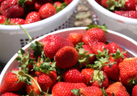Strawberries_murfreesboro_web