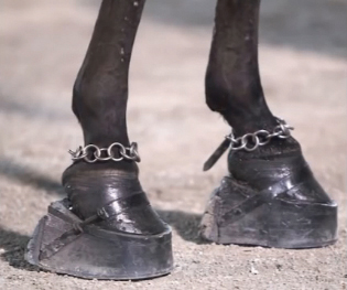 Traditional Walking Horse shoes and chains