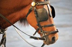 Blinders are another common method used to train Walking Horses.