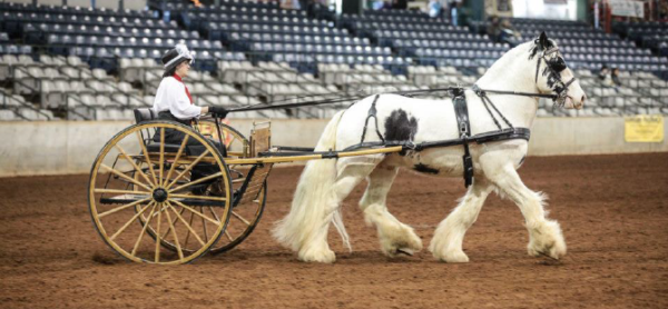 Feb. 26–28 - 2016 Southern Equine Expo
