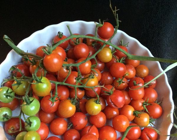 MCG_tomatoes