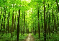 rising-temperatures-affect-forests-carbon-storage-role-study_265