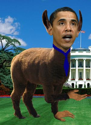 Obama Llama (2w)