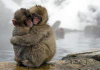 monkeyhugs