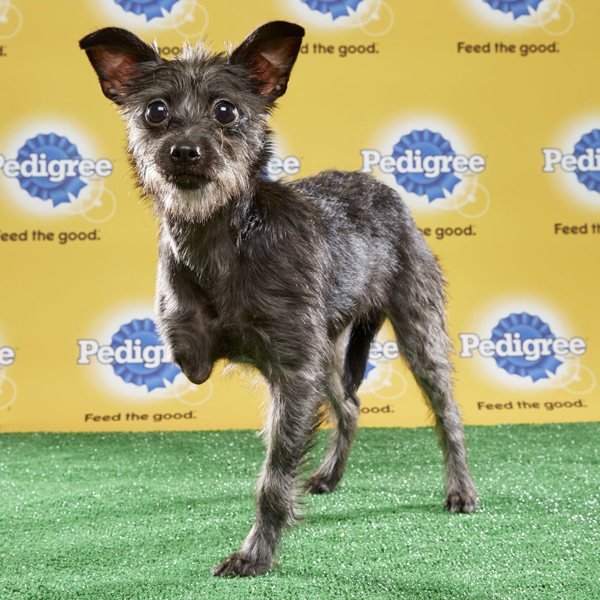 Lucky, a rat terrier mix, photo courtesy animal planet.com