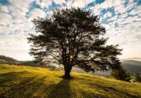 tree-dawn