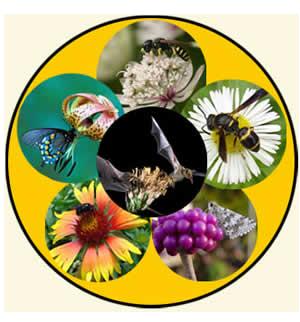 pollinators2