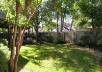 backyardtrees
