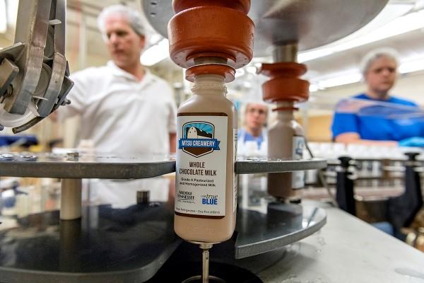 Processing chocolate milk